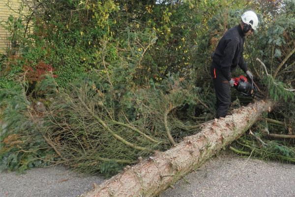 træ-fældning