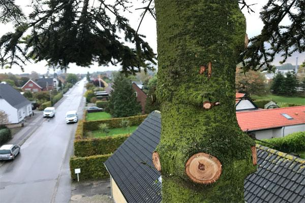 træ-topkapning
